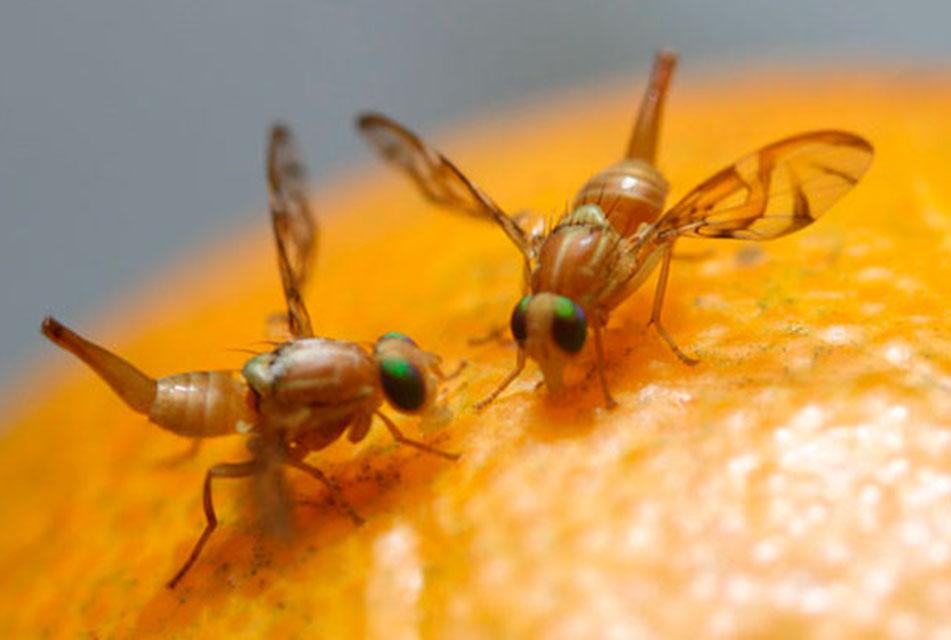 Qué es lo que atrae a las moscas
