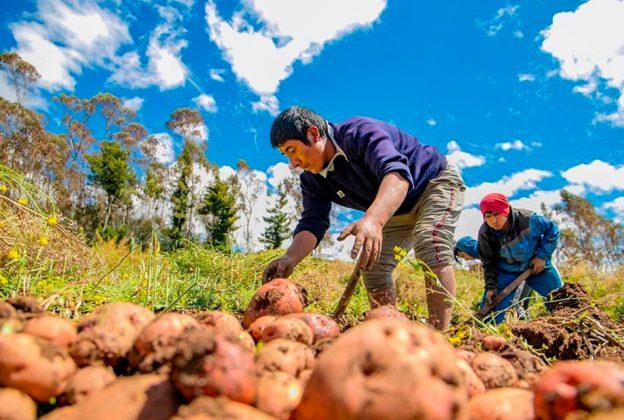 AGROBANCO: DESDE SU FUNDACIÓN, HA OTORGADO MÁS DE S/ 6 MIL MILLONES EN CRÉDITOS A AGRICULTORES